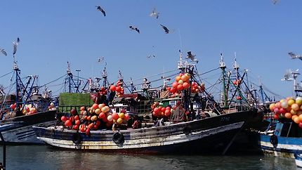 La pêche à Essaouira