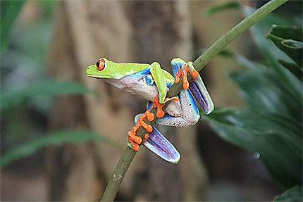 Emblême du Costa Rica