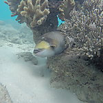 En snorkelling à Michaelmas Cay
