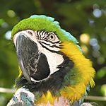 Le perroquet du parc National de San Gil