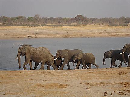 La plus forte concentration d'éléphants