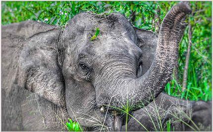 Elephant Hurulu Eco Park