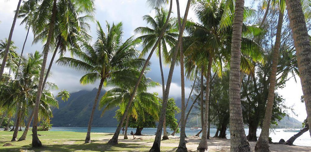 De retour d'un mois en Polynésie