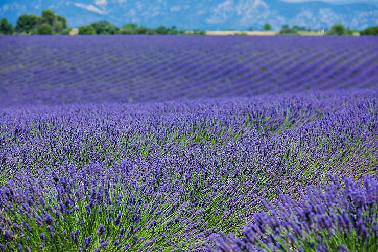 Bleu Provence, bleu lavande