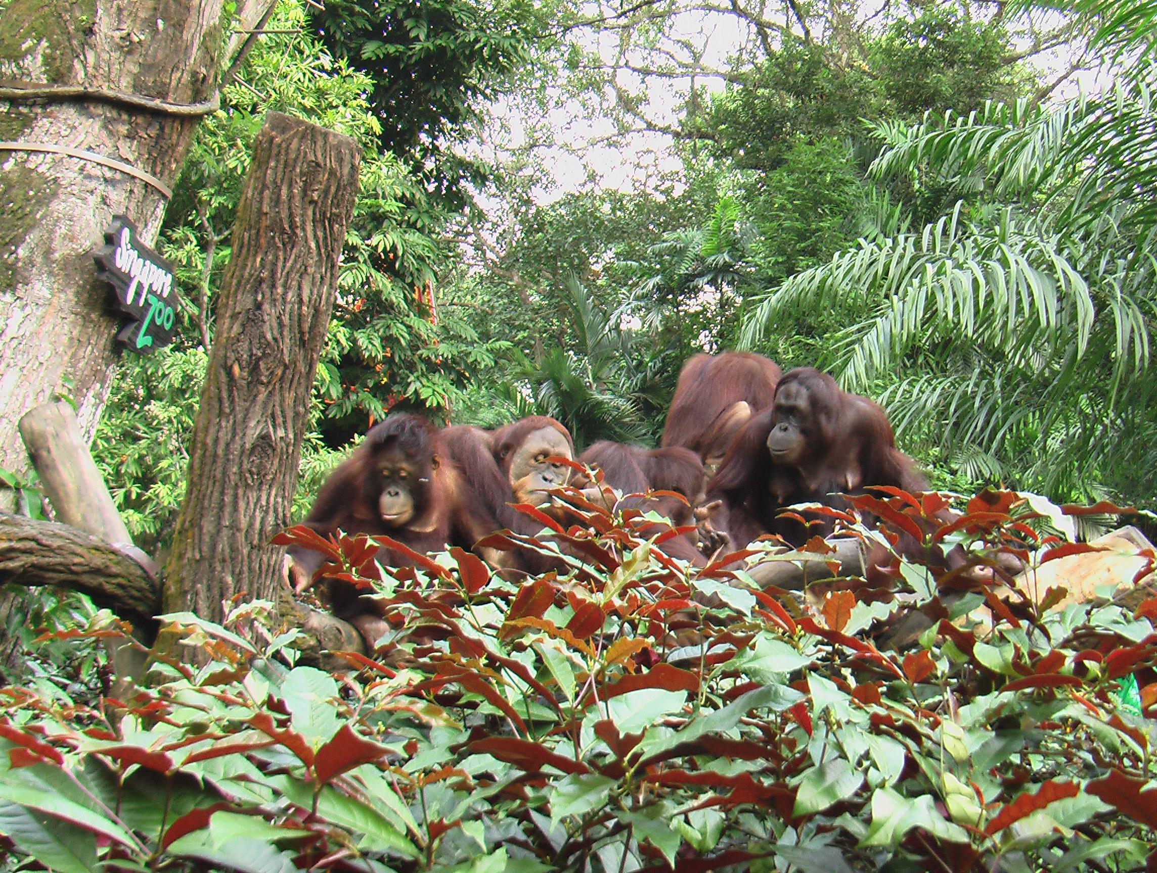 Zoo de Singapour - Singapour