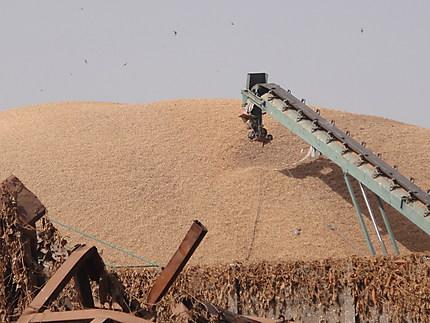 Stockage des arachides à Ziguinchor