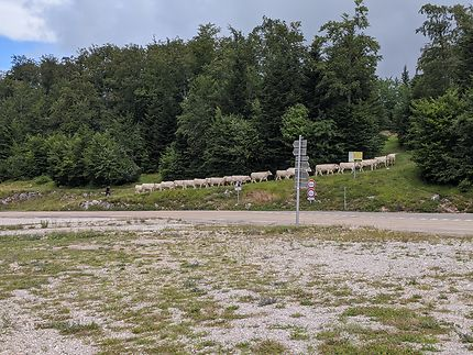 Changement de prairie en Ardèche