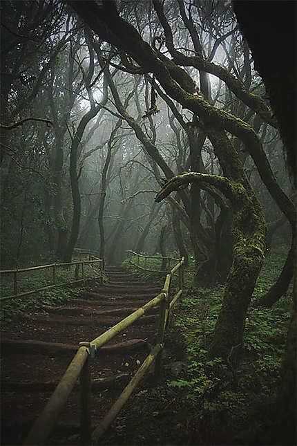 Dans la forêt de Garajonay