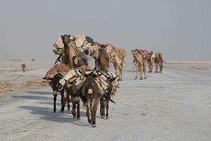 Sur la route du sel à Dallol, Ethiopie