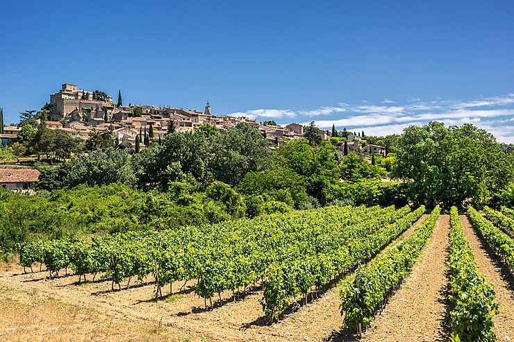 Vins et truffes du Luberon : « La vie en rose » et « Le rouge et le noir »