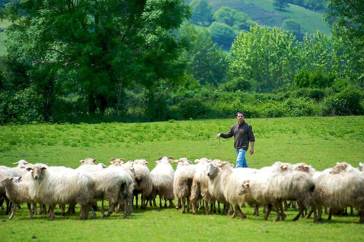 Pays basque, Béarn - Route du fromage Ossau-Iraty, sur les traces des bergers et des fromagers