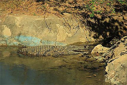 Les crocodiles près du lac sacré