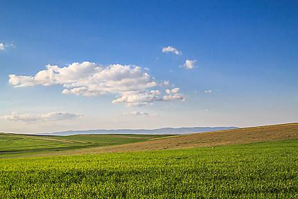Algérie - Hauts plateaux - Ciel et terre