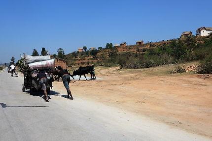 Route malgache à Ambalavao
