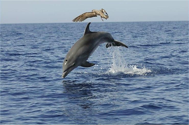 Randonner, observer des baleines et des dauphins
