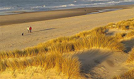 Dunes et oyats sur la plage de Wissant