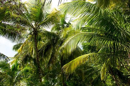 Les Îles du Salut, en Guyane
