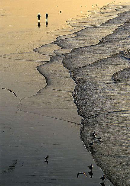 Promenade à marée basse au couchant sur la Côte d'Opale
