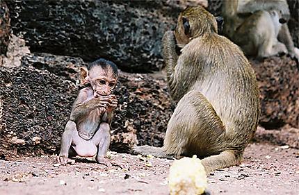 Bébé macaque