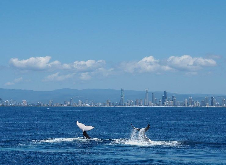 Whale watching in Goldcoast, Australie