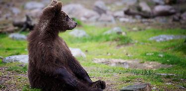 Aventure et safari en Laponie - 10 jours