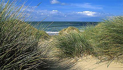 Dunes et oyats de Côte d'Opale