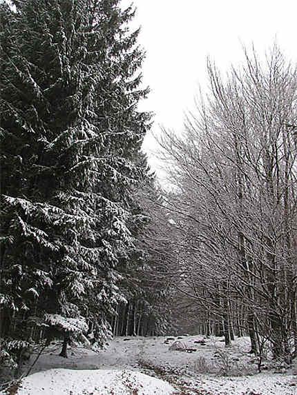 La neige et son blanc manteau