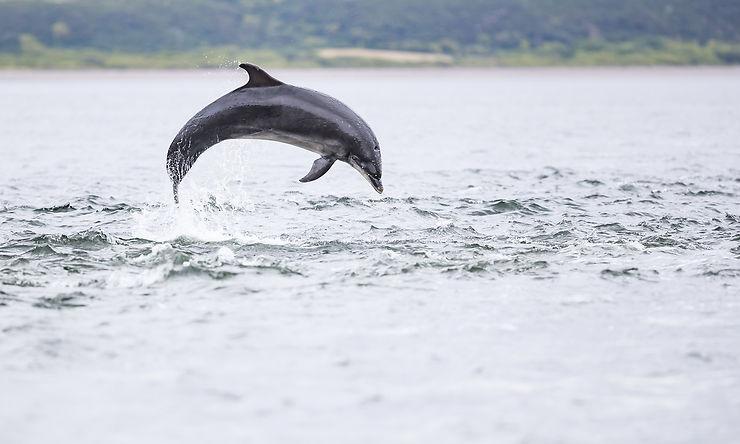 North Coast 500 : dauphins, Pictes et whisky
