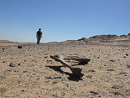 Marche vers le désert nubien