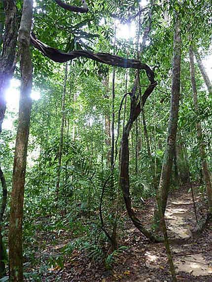 Promenade dans le parc Taman Negara