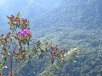 Mirador naturel, Réserve Alto Shiclayo