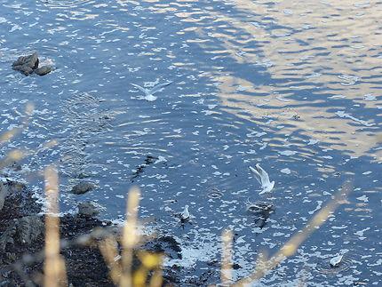 Bain de fin d'après-midi, Finistère