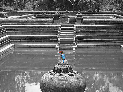 Oiseau Bleu (Anuradhapura)