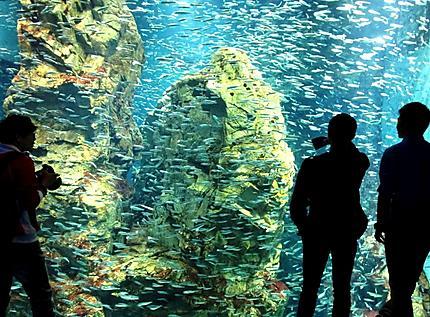 L'aquarium Kaiyukan