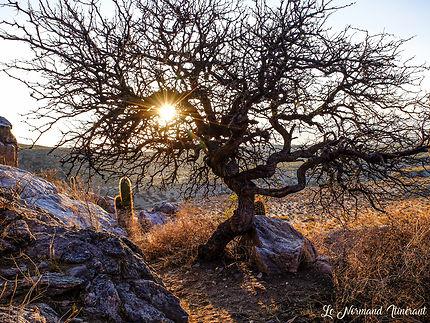 Très vieux arbre dans le désert argentin