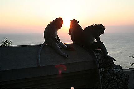 Couché de soleil sous l'oeil des singes