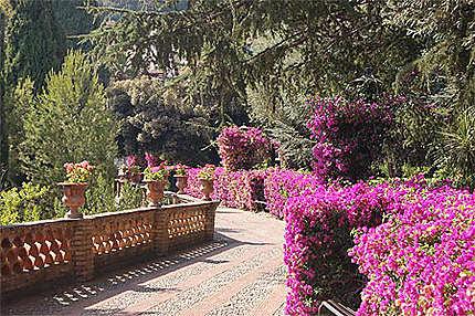 Les lauriers du parc de Taormina