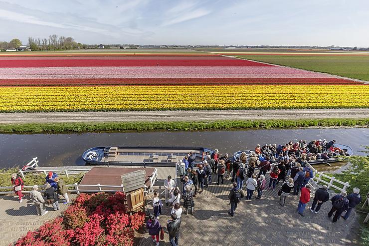 Le printemps en fleurs au keukenhof de lisse for Le jardin keukenhof