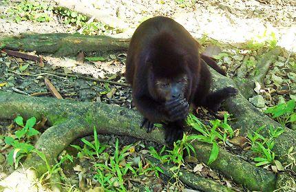 Jungle de Palenque