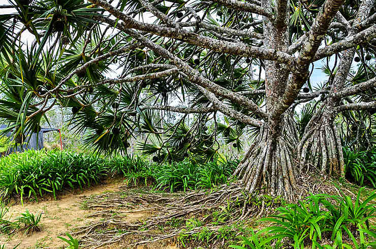 L'arbre inconnu