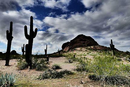 Désert de Sonora près de Phoenix
