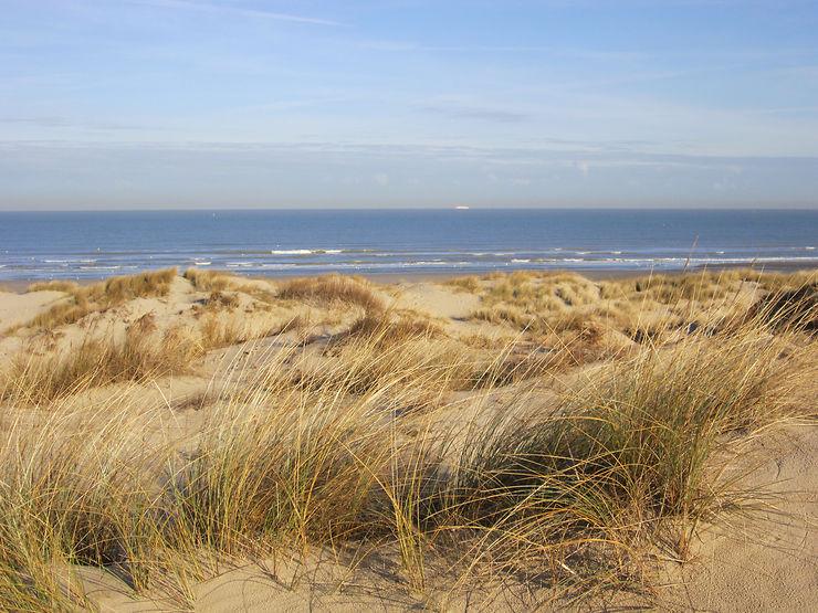 La dune Marchand, le Sahara du Nord - Nord (Nord-Pas-de-Calais)