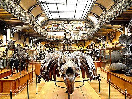 Galerie de Paléontologie