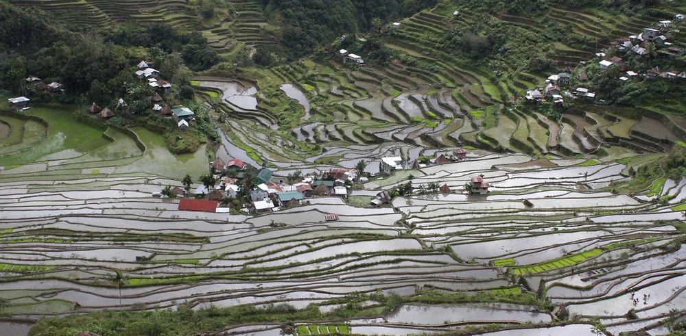 Treks à gogo dans les rizières Ifugao