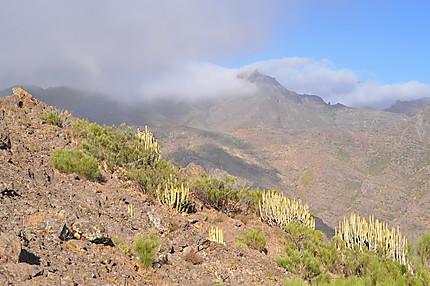 Paysage du massif du Teno
