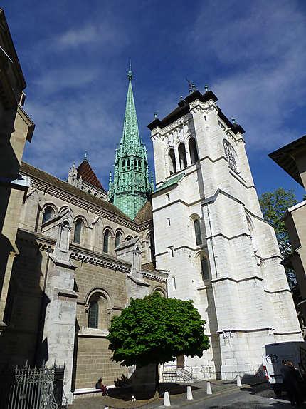 Arbre au pied de la cathédrale