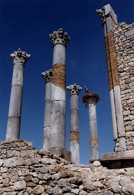 Colonnes romaines en ruines à Volubilis