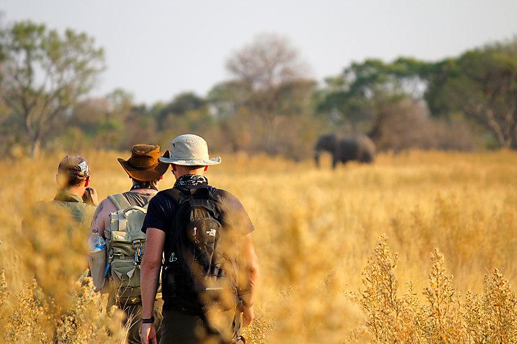 Formalités - Botswana : une taxe touristique de 30 dollars à l'arrivée