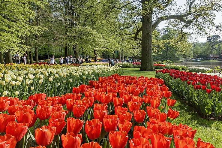 Le plus grand jardin de fleurs au monde !