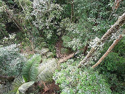 A 40 m de hauteur, depuis le canopy walway
